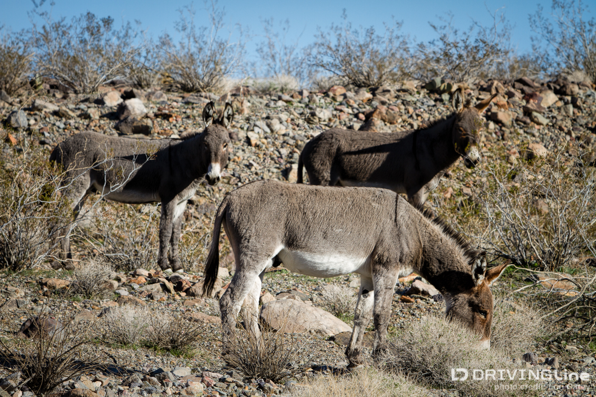 unnamed trail exploration in the mojave desert drivingline